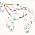 Equine Gait Collection