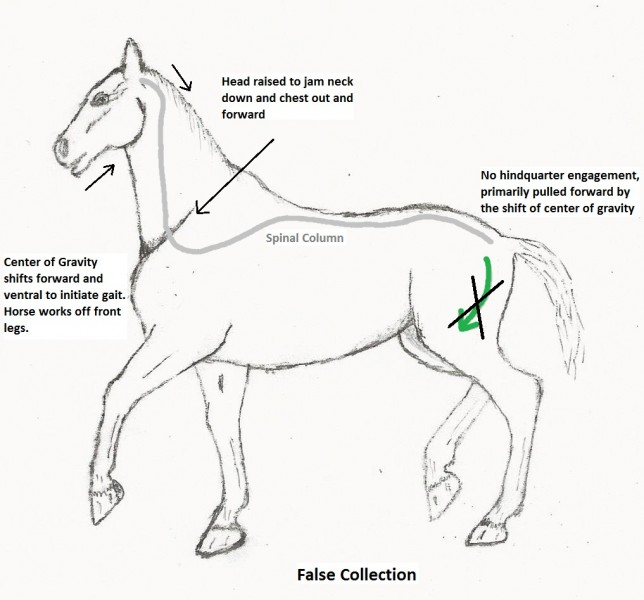 Depiction of the horse's motion to try to initiate movement in False Collection.